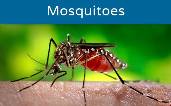 Mosquito control agencies